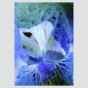 Iris diptyque