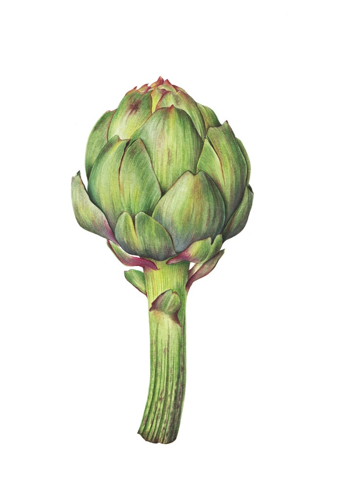 """Globe Artichoke"". Botanical watercolor fine art print."