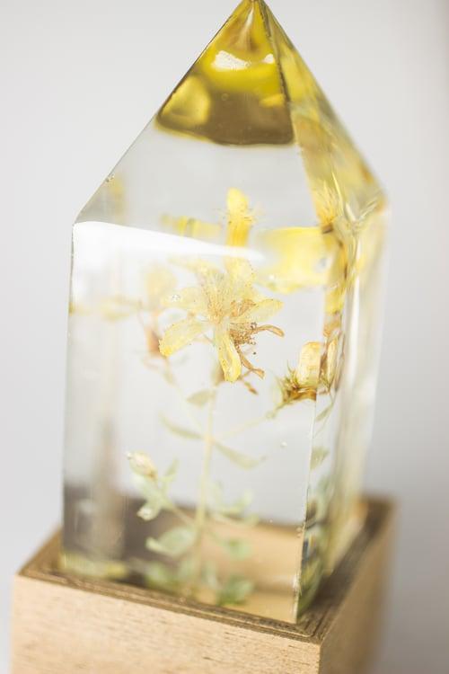 Image of St. John's Wort (Hypericum perforatum) - Floral Night-Light #1