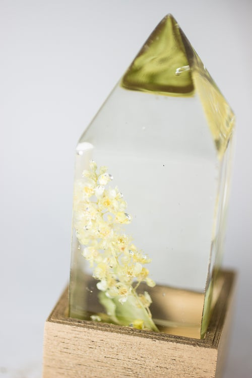 Image of Chokecherry (Prunus virginiana) - Floral Night-Light #2