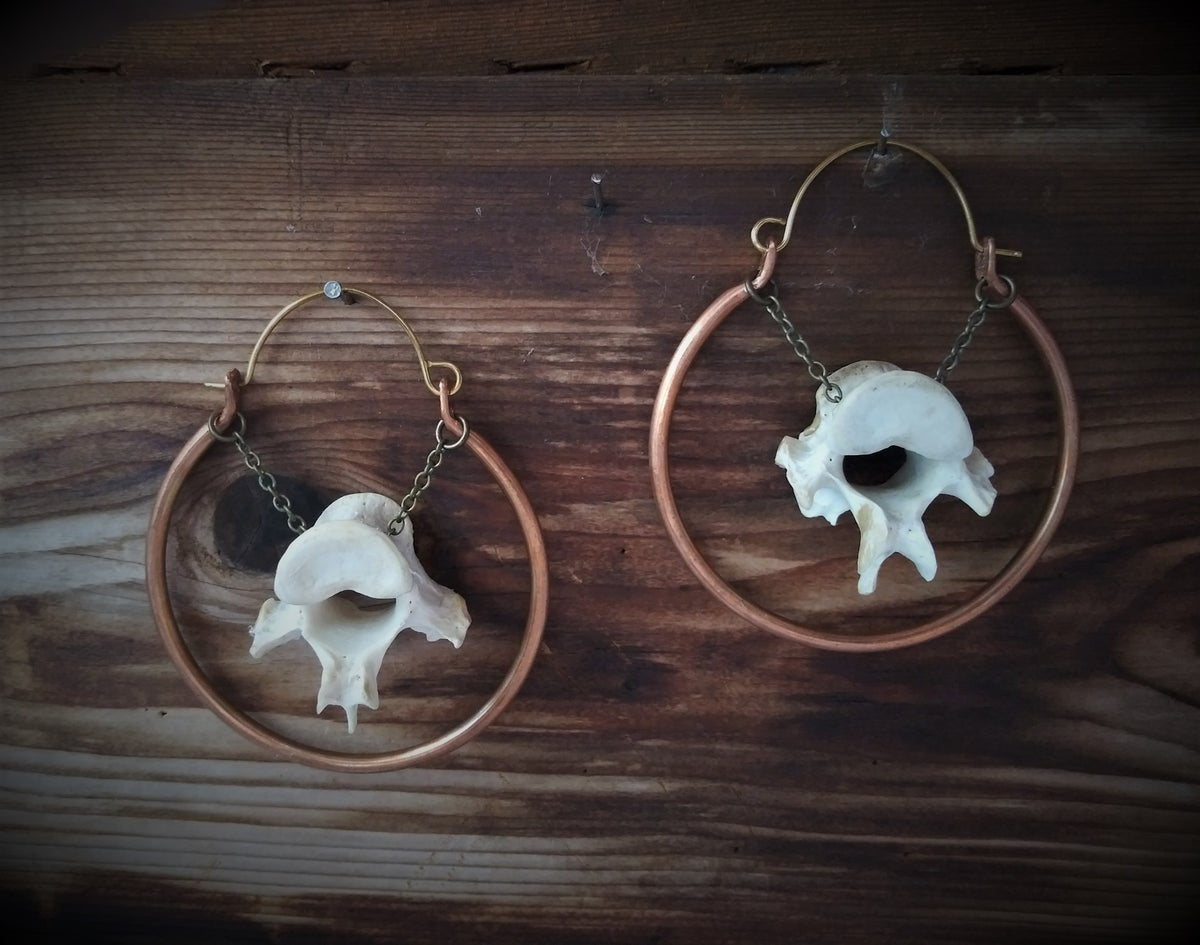 Image of Coyote Vertebrae Hoops