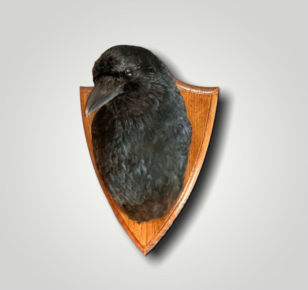 Crow on shield