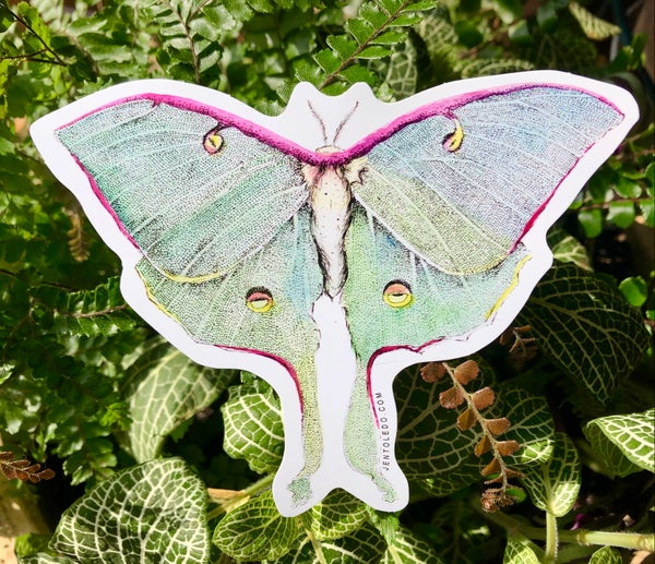 Image of Luna Moth Sticker