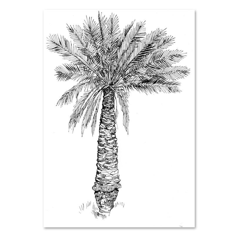 "Image of Original Drawing - ""Palmier dattier"" - 21x30 cm"