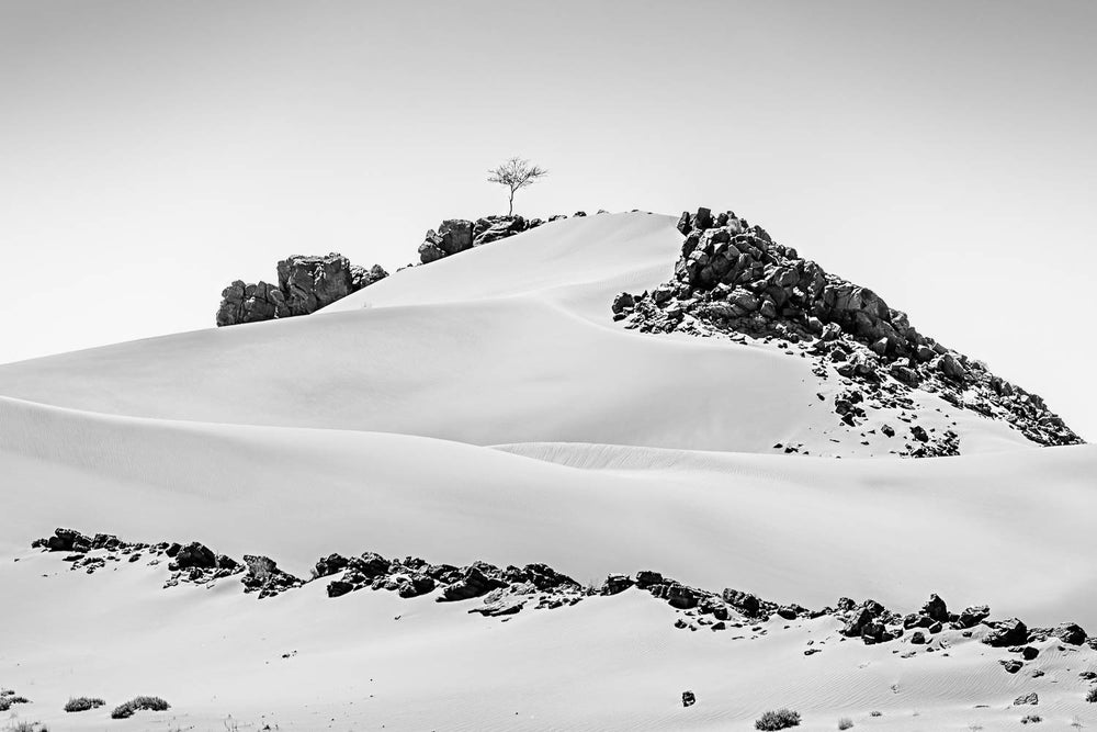 Image of The lone tree - Morocco
