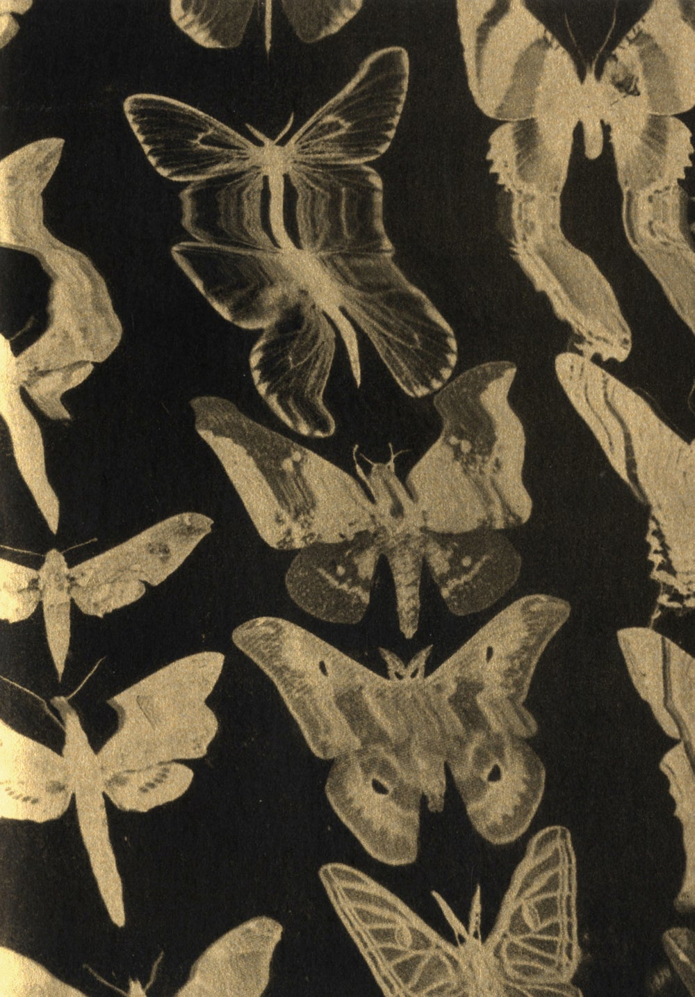 Image of A3 Golden Butterfly Print