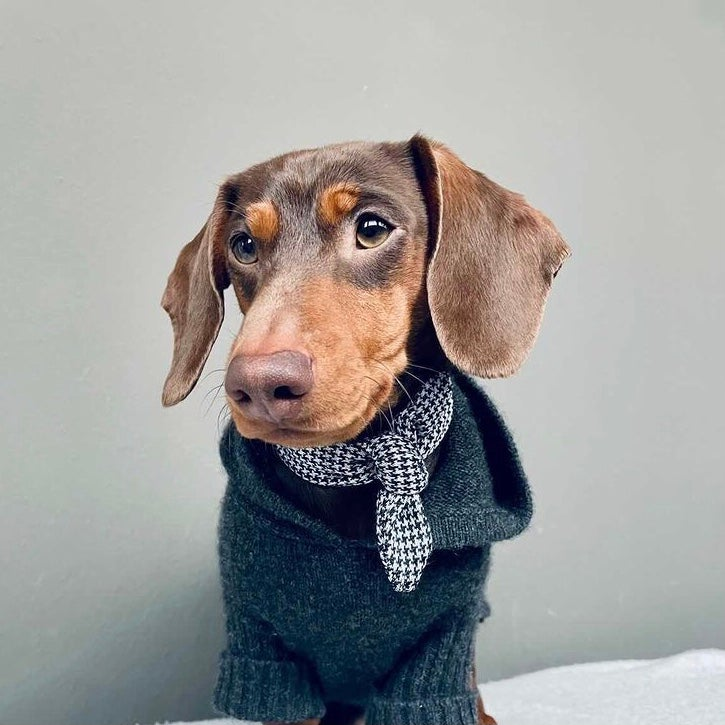 Image of Houndstooth