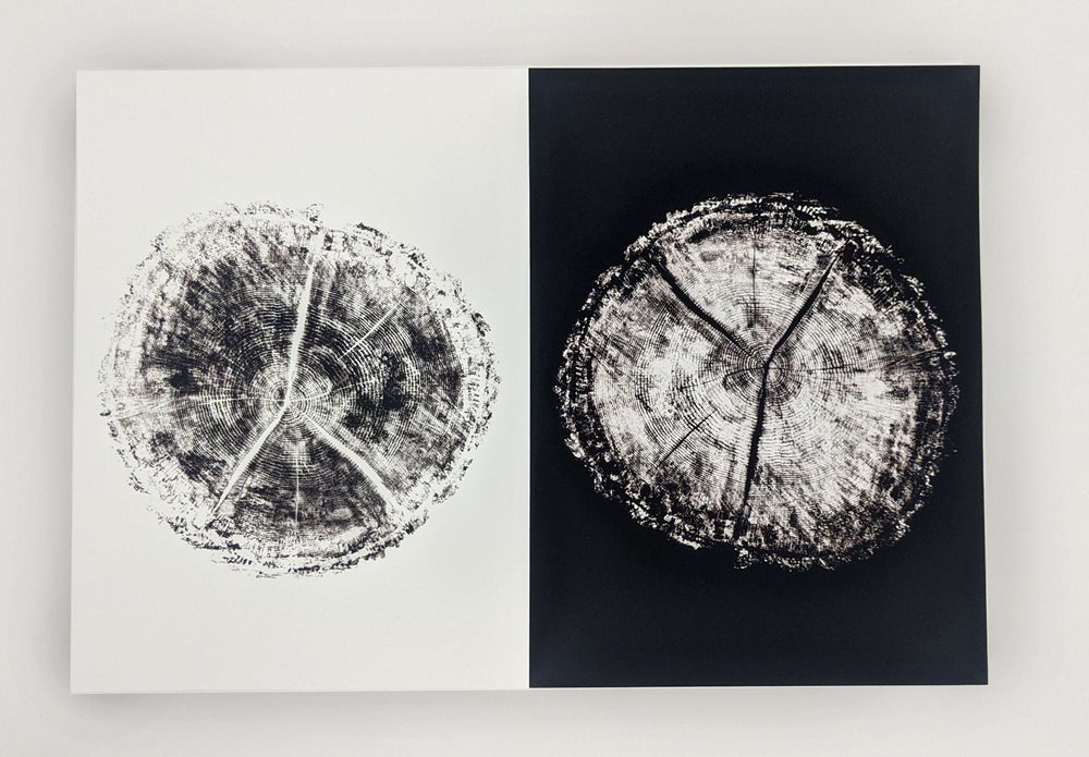 """Age"" Black & White - Our original tree ring block art print on recycled paper."