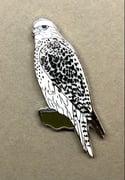Gyr Falcon - January 2021