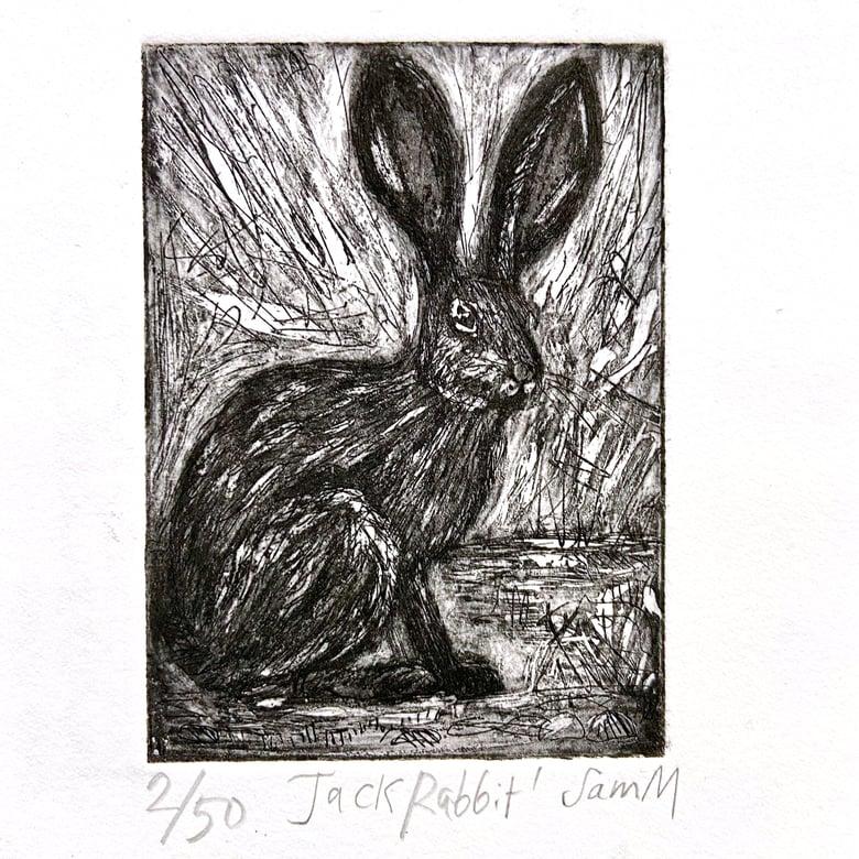 Image of Jack Rabbit