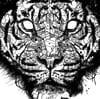 SUMATRA TIGER JUNGLE FACE