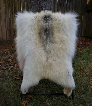 Image of Pale Wolf Skin
