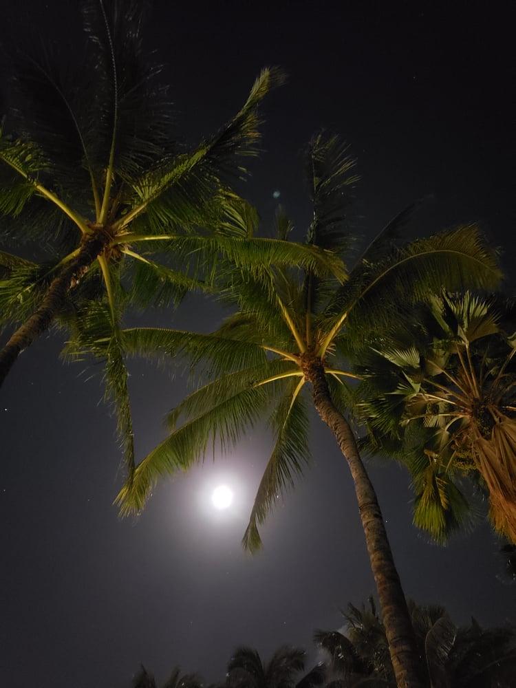Image of Hawaiian Tiki Palm