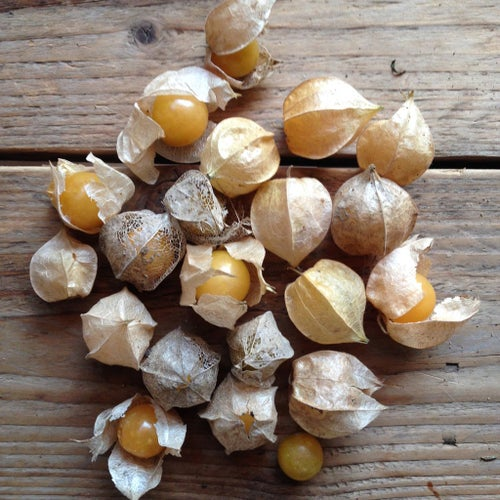 Image of Cape Gooseberry Golden Berry Seeds