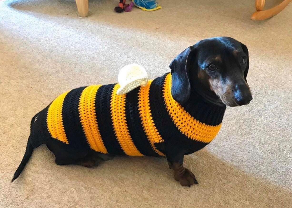 Image of Snazzy Bumble Bee Jumper