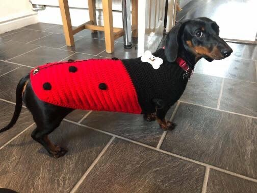 Image of Snazzy Ladybird Jumper