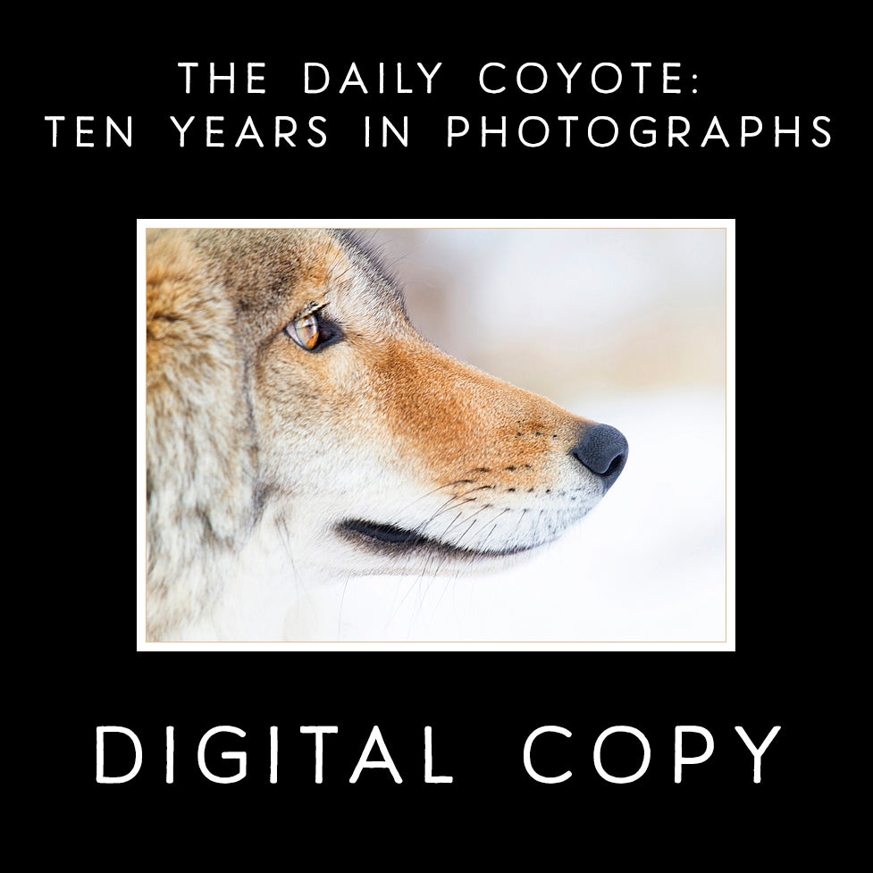 Image of [PDF VERSION] The Daily Coyote: Ten Years In Photographs