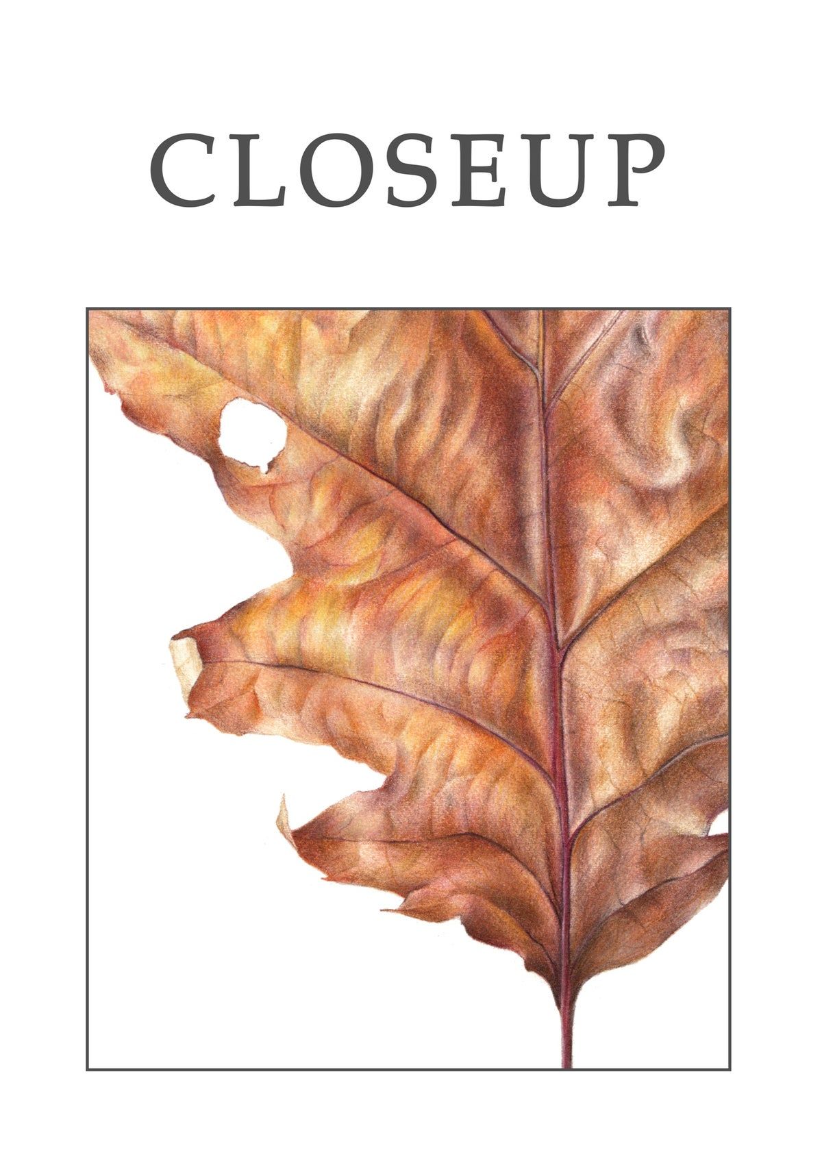 """""""Northern Red Oak Leaf"""". Botanical fine art print of a colored pencil drawing."""
