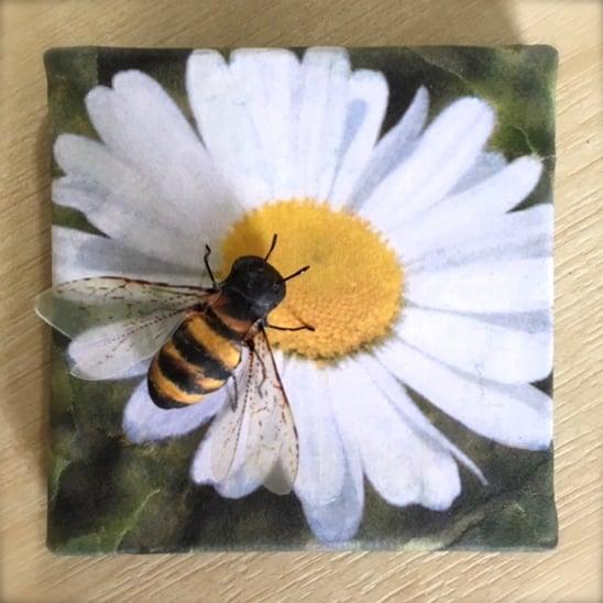 Image of Honey bee Daisy Beeasel.