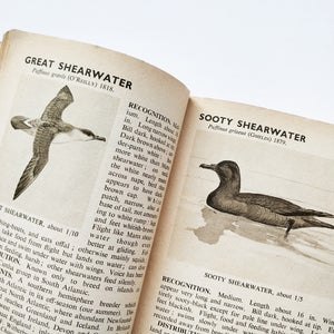 The Pelican Book of Bird Recognition: Sea-Birds and Waders