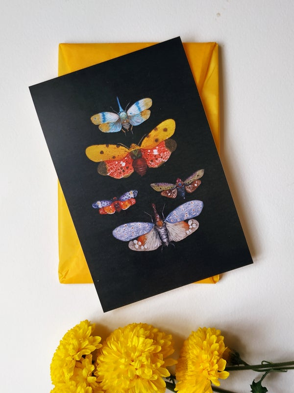 Image of Insect postcard, black background bstationery, Entomology cards, postcard collector, lanternfly