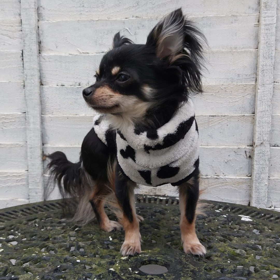 Image of Miniature dog breed jumper