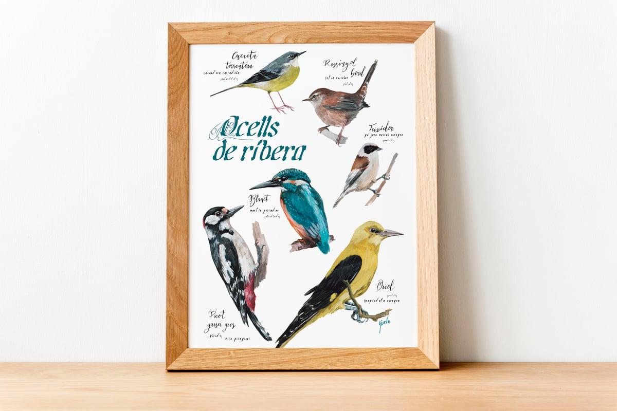 Ocells de ribera/River birds
