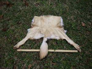 Image of Wolf Pelt Rear Half