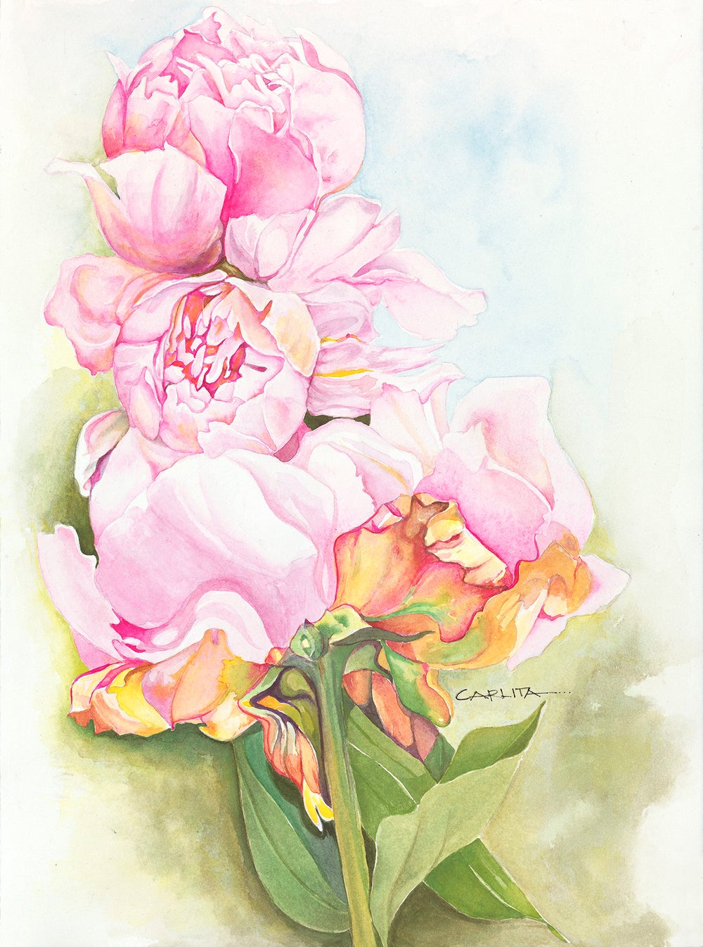 Image of Pink Peonies (Unframed)