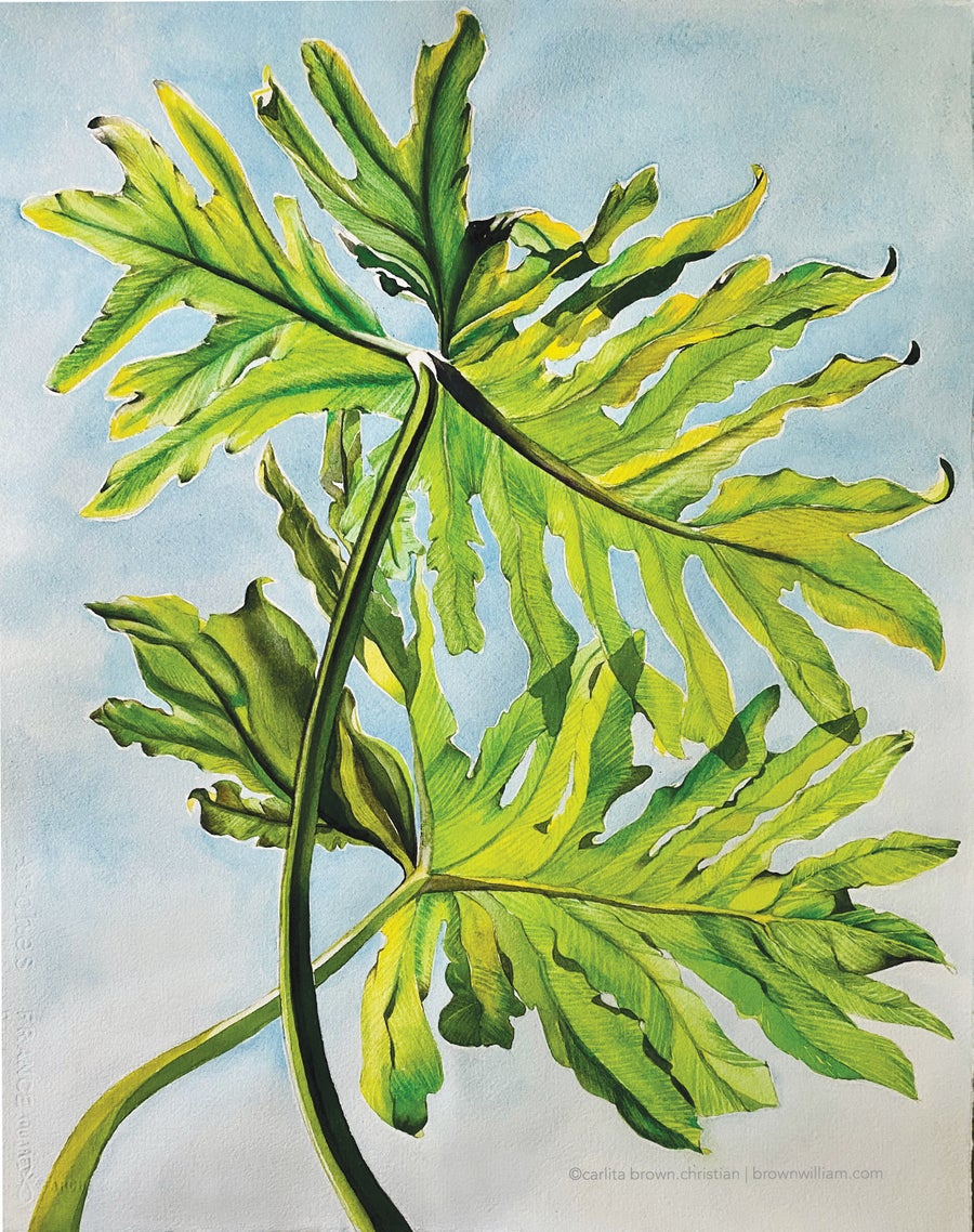 Image of PHILODENDRON (Unframed) Prints coming soon!