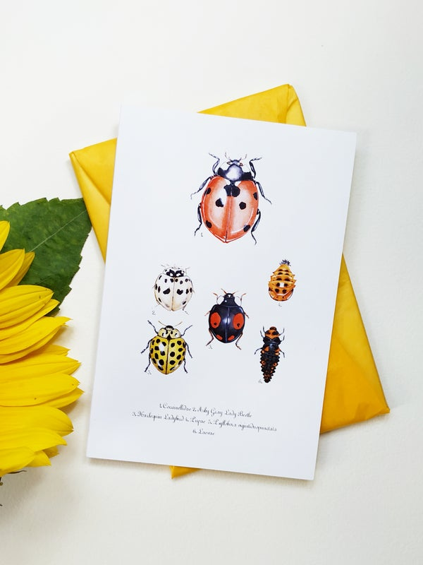Image of Ladybug Postcard, Moth and beetles Postcards, Nature Art, Ladybird note card, insect stationery.
