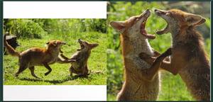 Image of Foxy Lockdown Hardback Photo-book