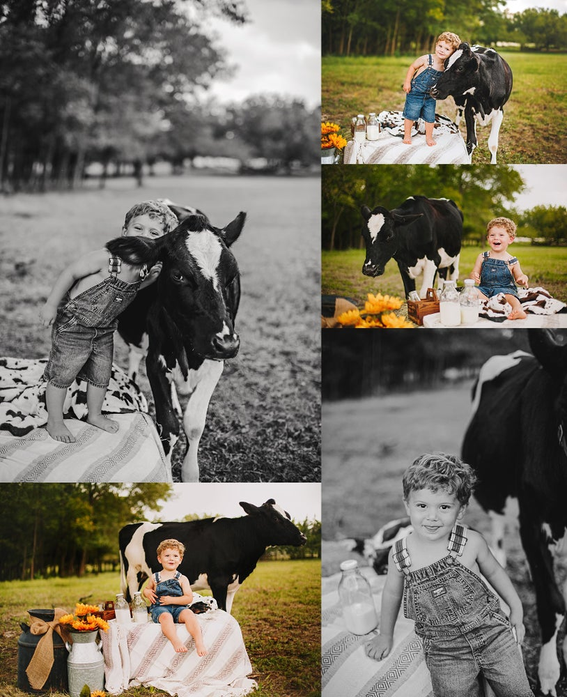 Image of Lovey the Cow Mini Sessions