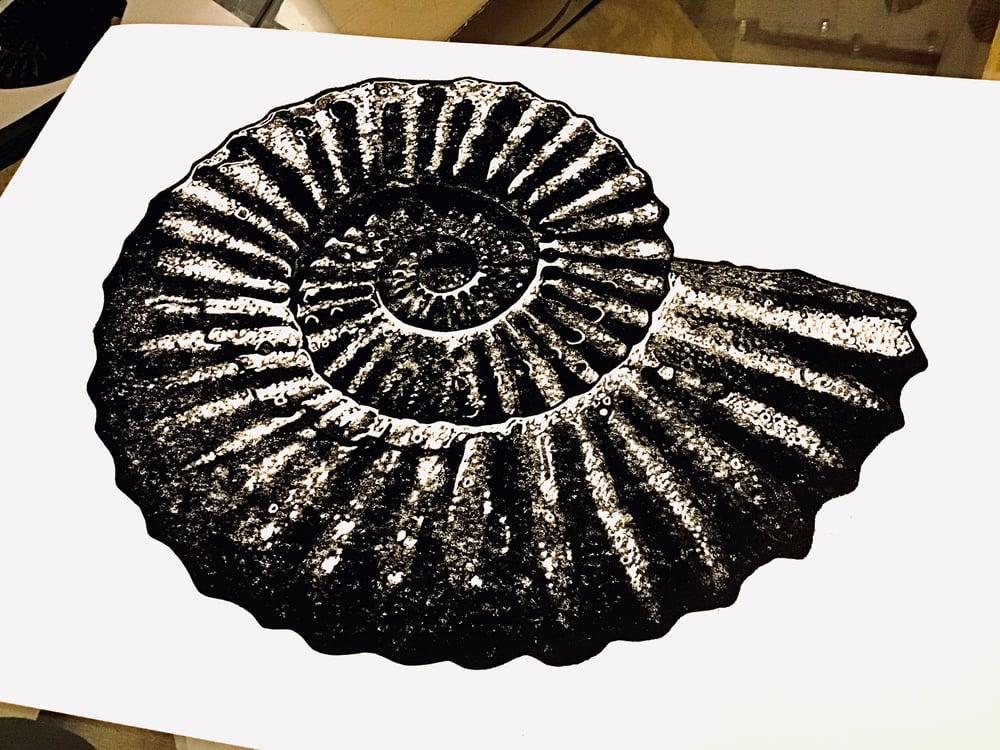 Ammonite - grey/black linocut print