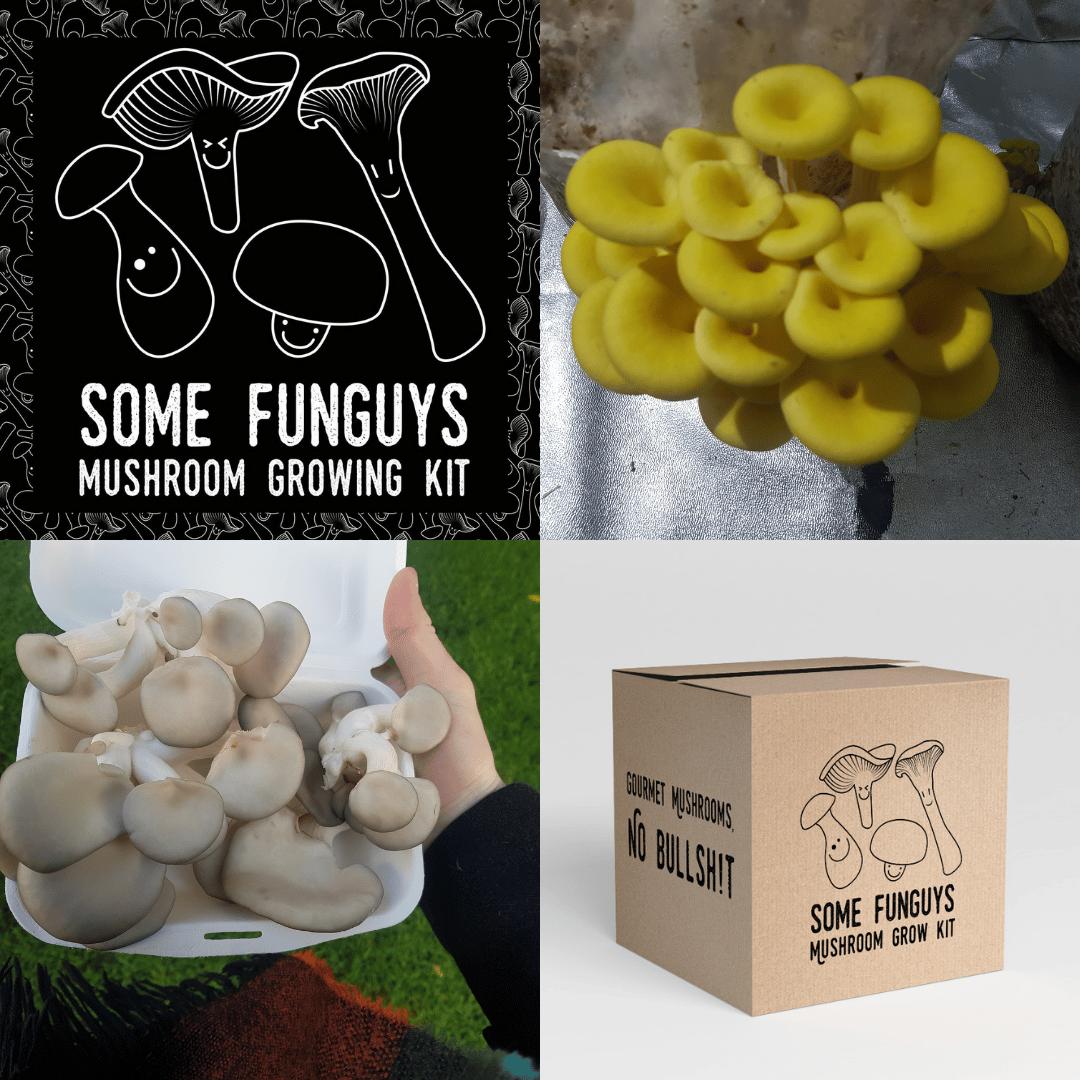 Image of Triple up! Three gourmet mushroom grow at-home kits
