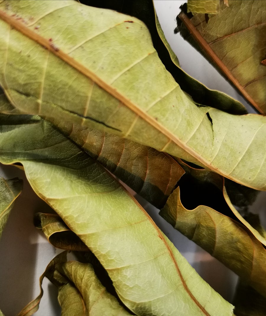 Image of Mango Leaf