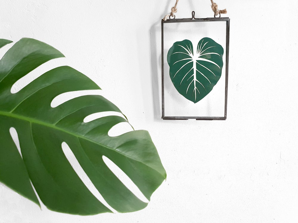 Image of philodendron gloriosum leaf