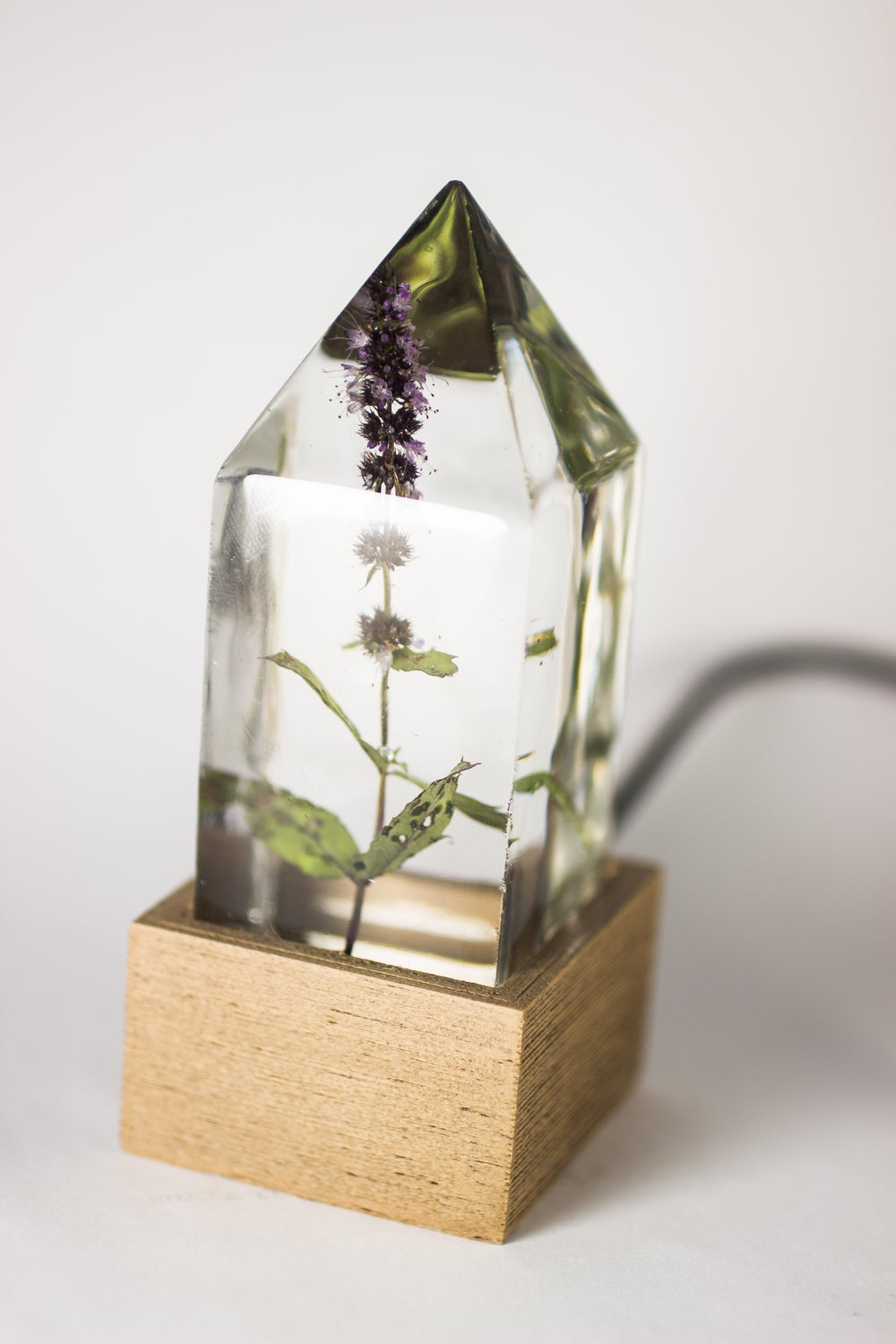 Image of Peppermint (Mentha x piperita) - Floral Night-Light #1