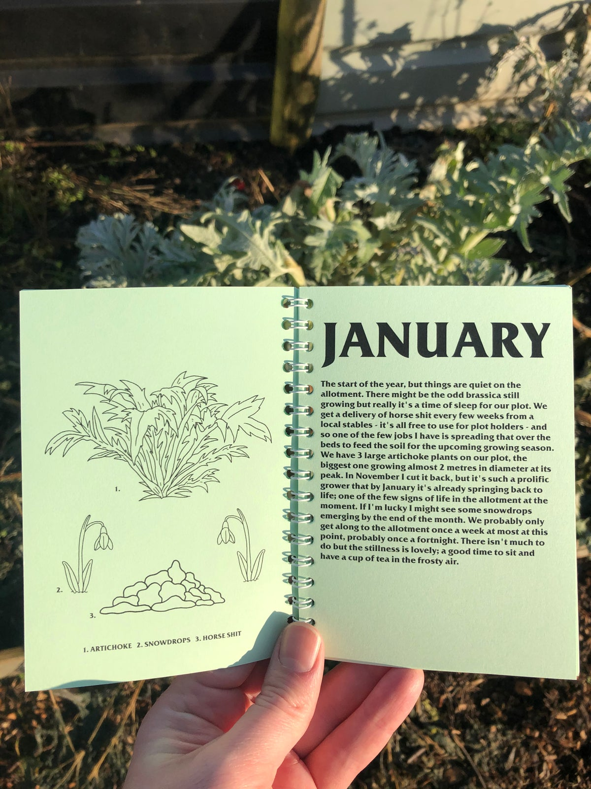 Image of A Year in the Allotment
