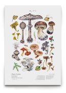 Image of [Forager's Poster Pack] - Edible & Poisonous Mushrooms