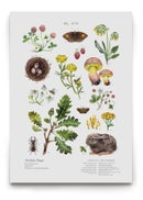 Image of [The Foliage Poster Pack] - Oak Wood Pasture & Forest Brook