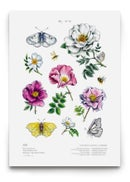 Image of [The Floral Poster Pack] - Thorn rose valley & Botanical alphabet