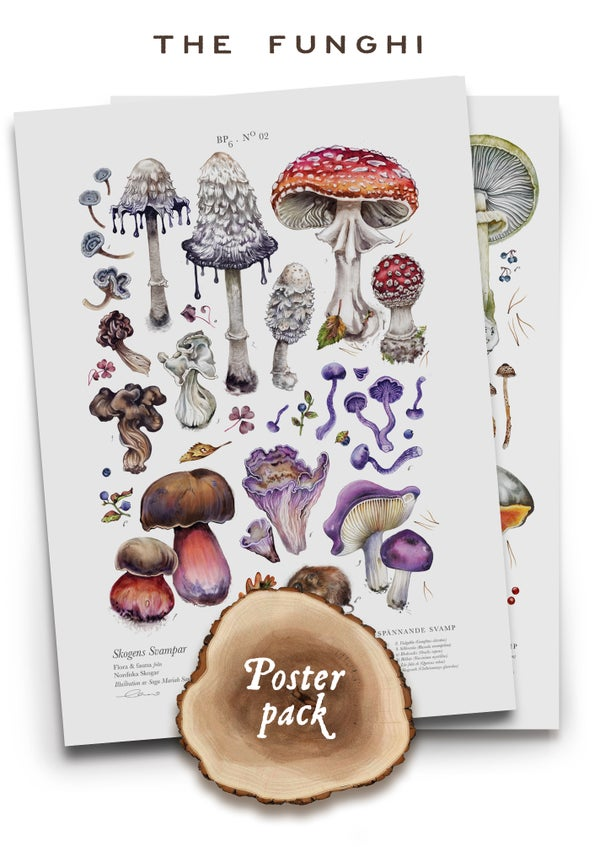 Image of [Funghi Poster Pack] - Peculiar & Poisonous Mushrooms