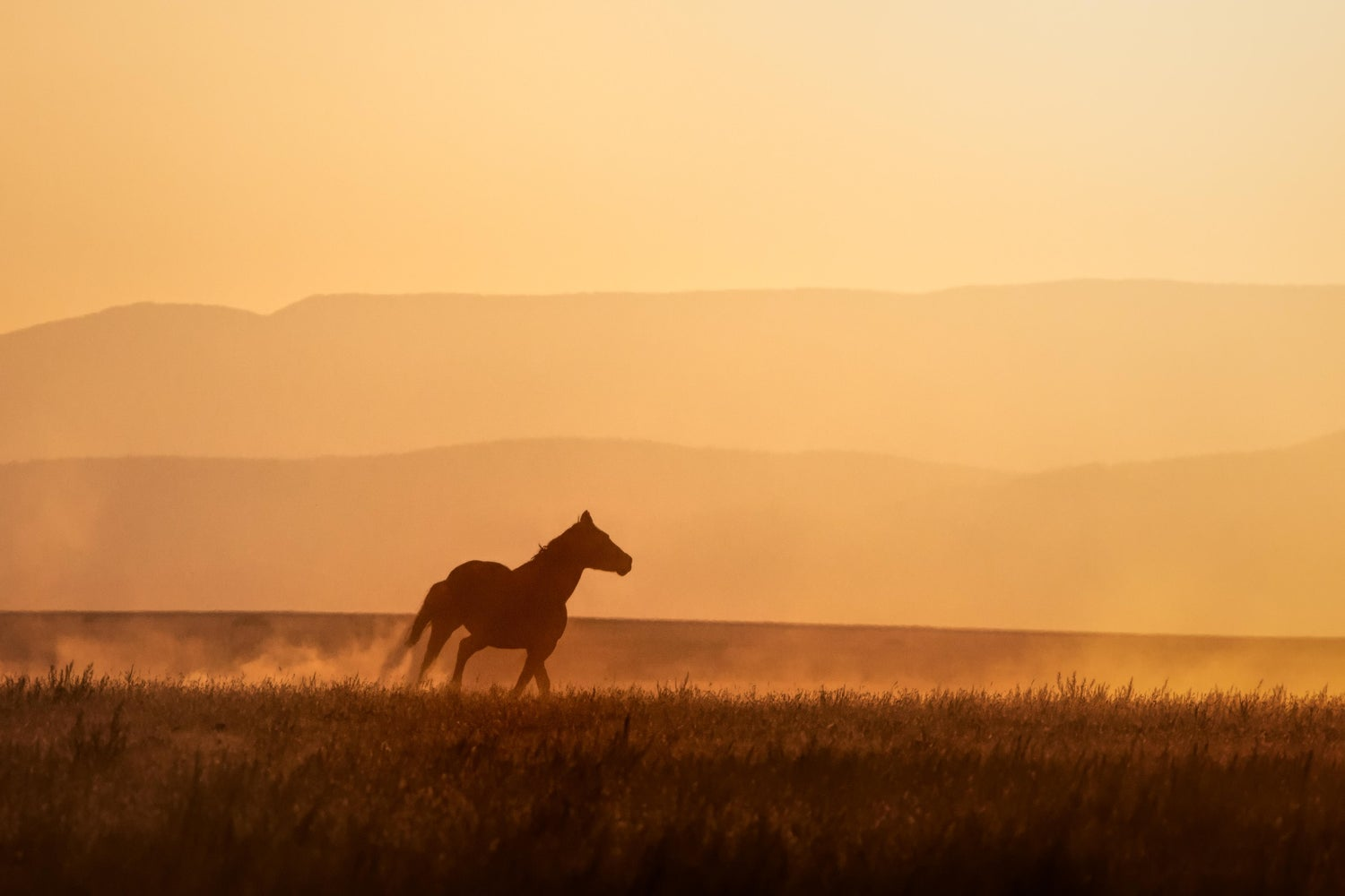 Image of Horse With No Name
