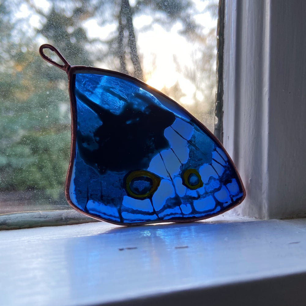 Image of Blue Pansy Butterfly Wing