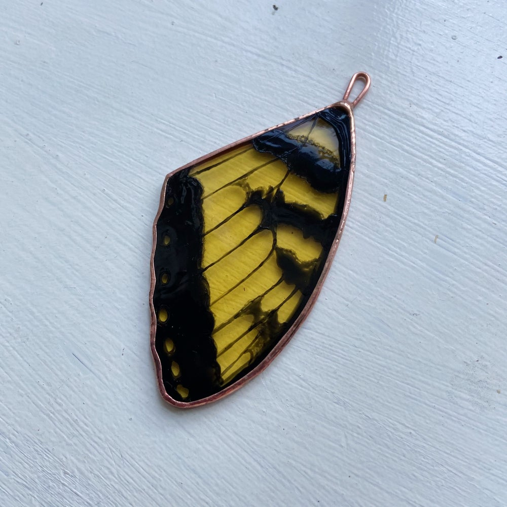 Image of Tiger Swallowtail Butterfly Wing
