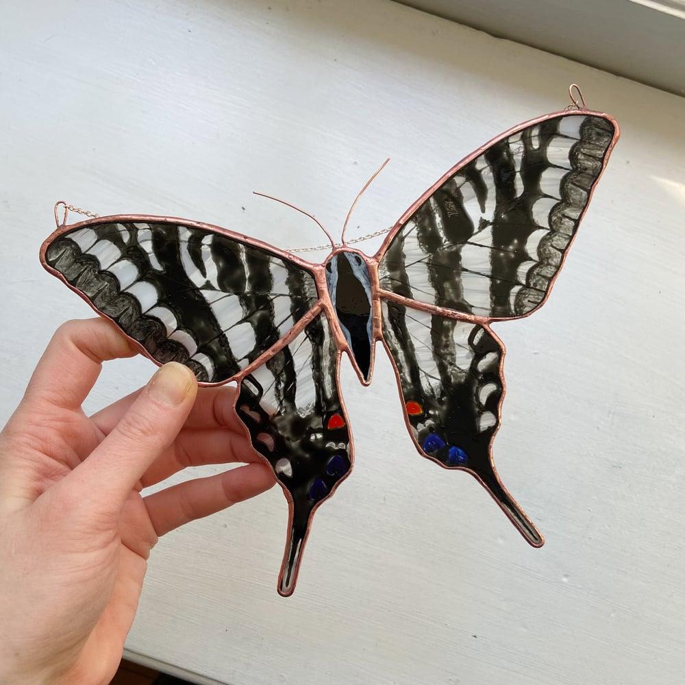 Image of Zebra Swallowtail Butterfly