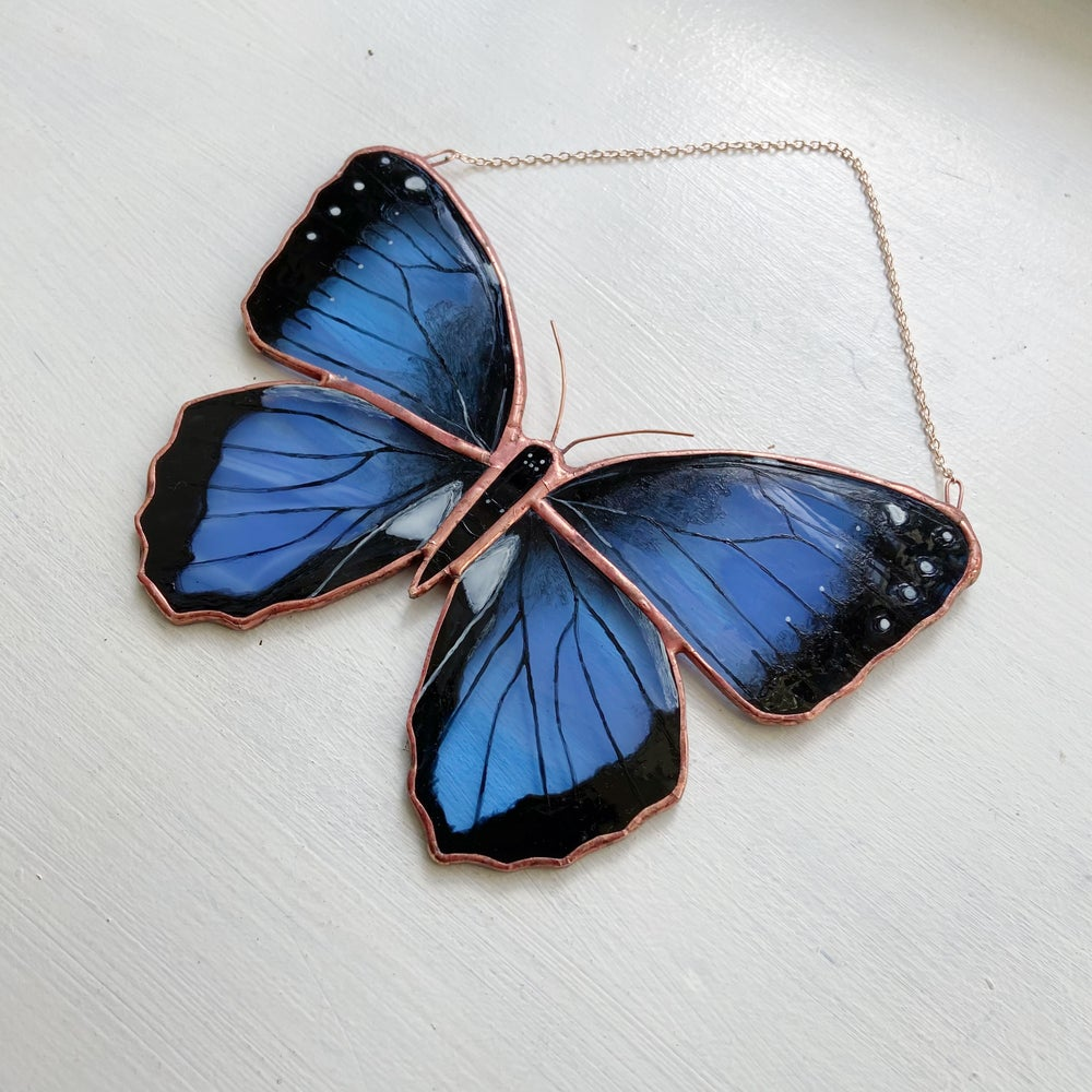 Image of Common Morpho Butterfly
