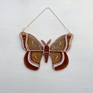 Image of Calleta Silkmoth