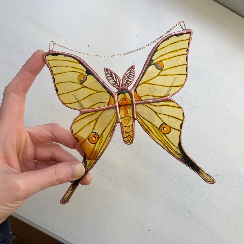 Image of African Moon Moth